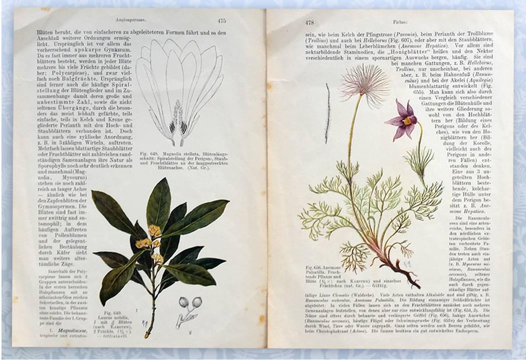 botanika (2)