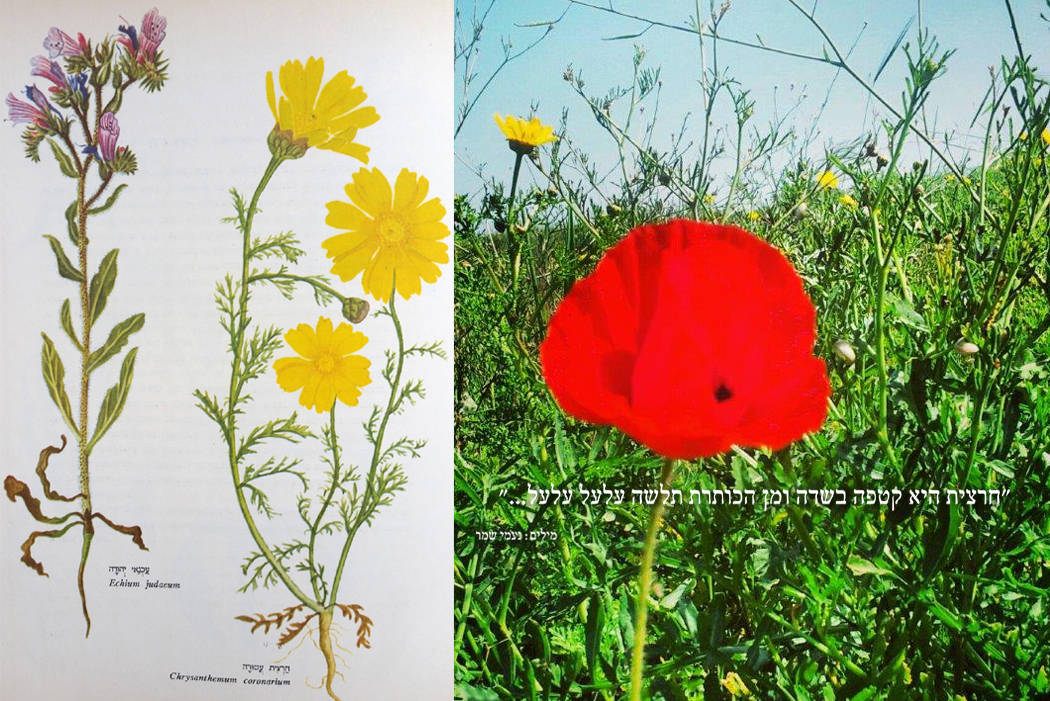 botanika&flower 4