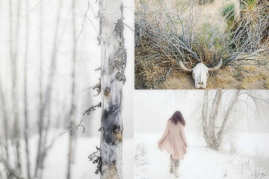 מדבר, מוות, חיות, שלג, גזע, צפון, מצפן ,מתוך הבלוג Tamari and me של תמרי סלונים ליבס פוסט: 18:45 לא סופי