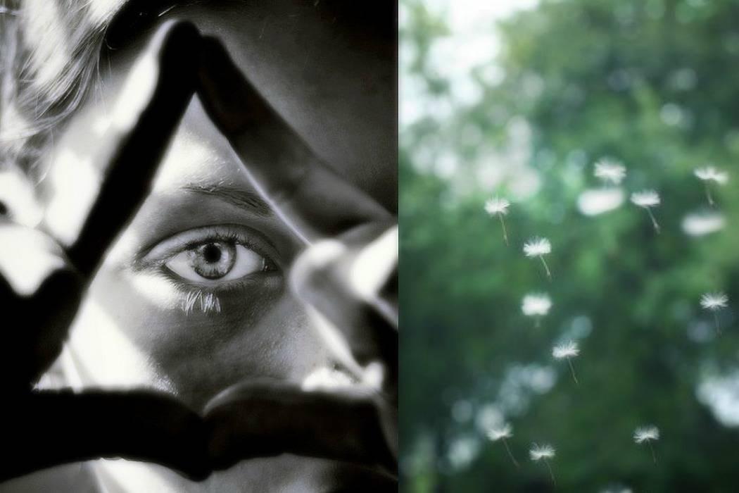 סביונים, עיניים מתוך הבלוג Tamari and me של תמרי סלונים ליבס פוסט: סודות