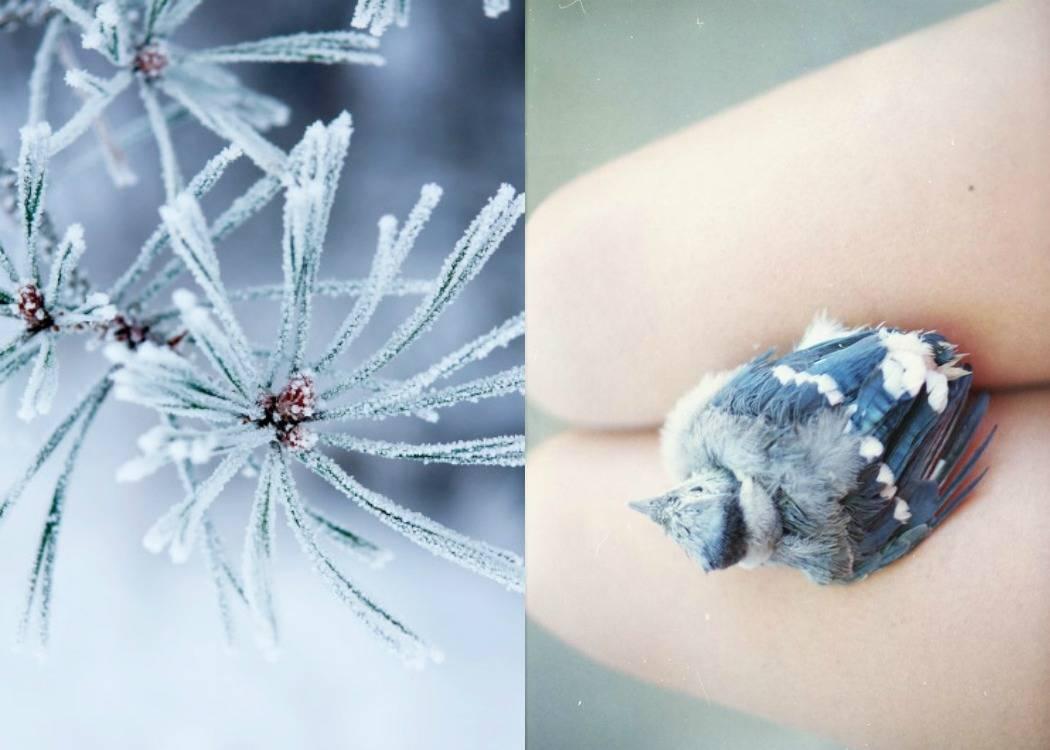 ציפור, כחולה, קרח, קפוא, מוות. סיכות של זהב, פוסט על התחלה ראשונה מתוך הבלוג תמרי אנד מי. תמרי סלונים ליבס