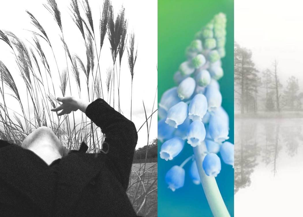 פרחים, אגם, השתקפות שיבולים, שדה. סיכות של זהב. פוסט על פעם ראשונה מתוך הבלוג תמרי אנד מי. תמרי סלונים ליבס