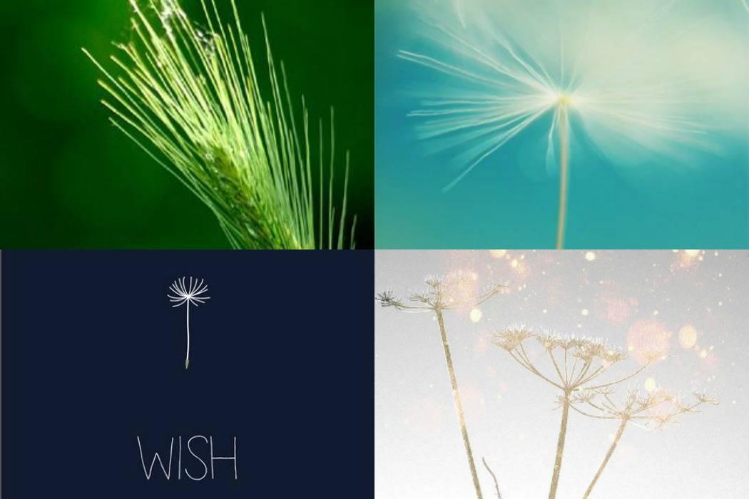 שדות חיטה, סביונים, משאלה במבי מתוך הבלוג של תמרי אנד מי פוסט על יום הולדת תמרי סלונים ליבס