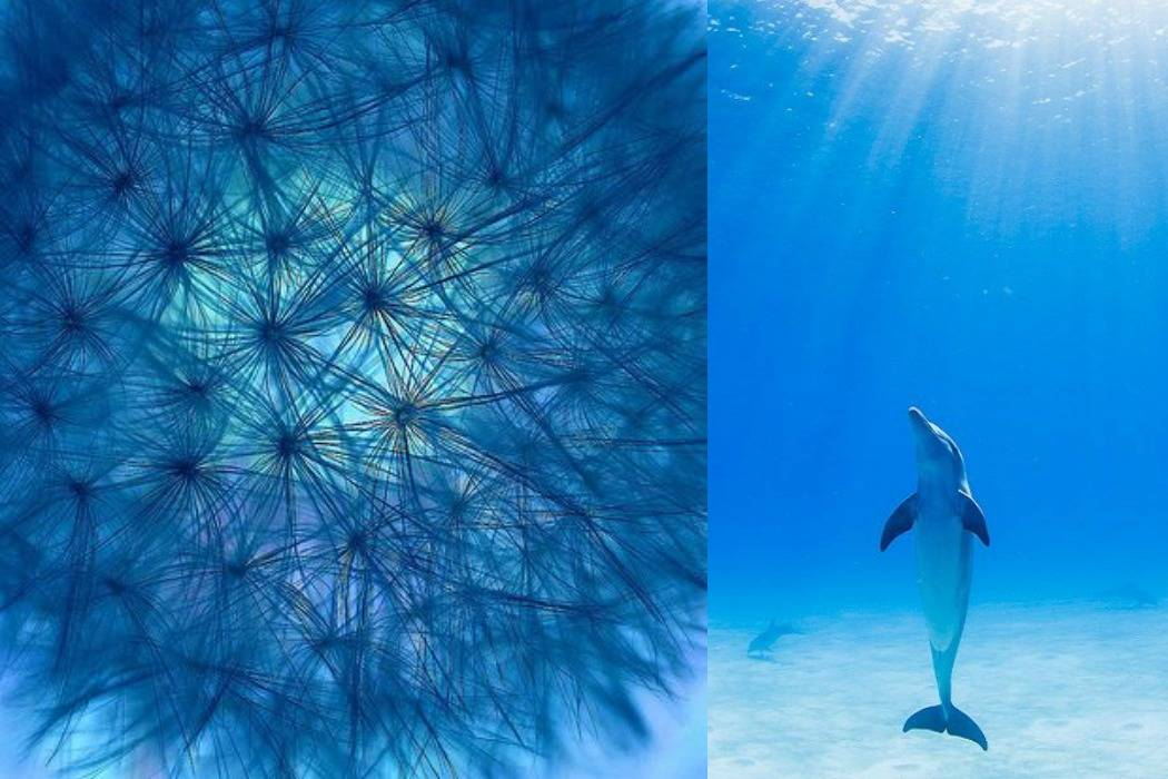 דולפין, מצולות, סביונים מתוך הבלוג של תמרי אנד מי פוסט על יום הולדת תמרי סלונים ליבס