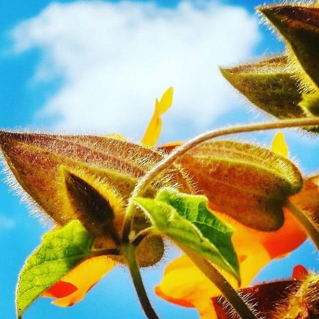 Just what it is tamariandme sky flowerdaily jjcolors jjflowers igisraelhellip