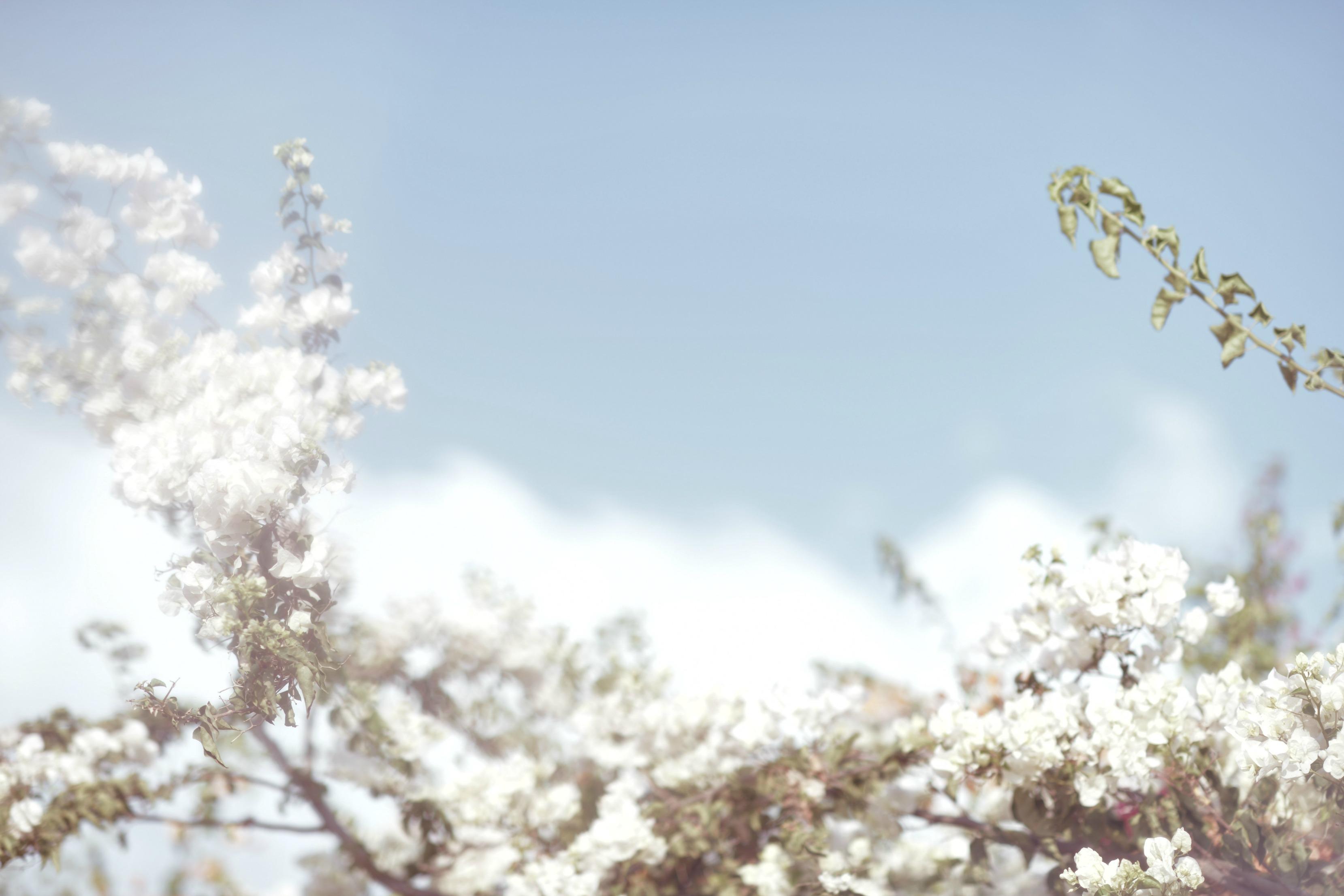 עננים שמיים ופרחים מתוך הפוסט חיבוק של אדמה של תמרי סלונים ליבס/ צלמת: טלי רצקר בבלוג tamariandme.com