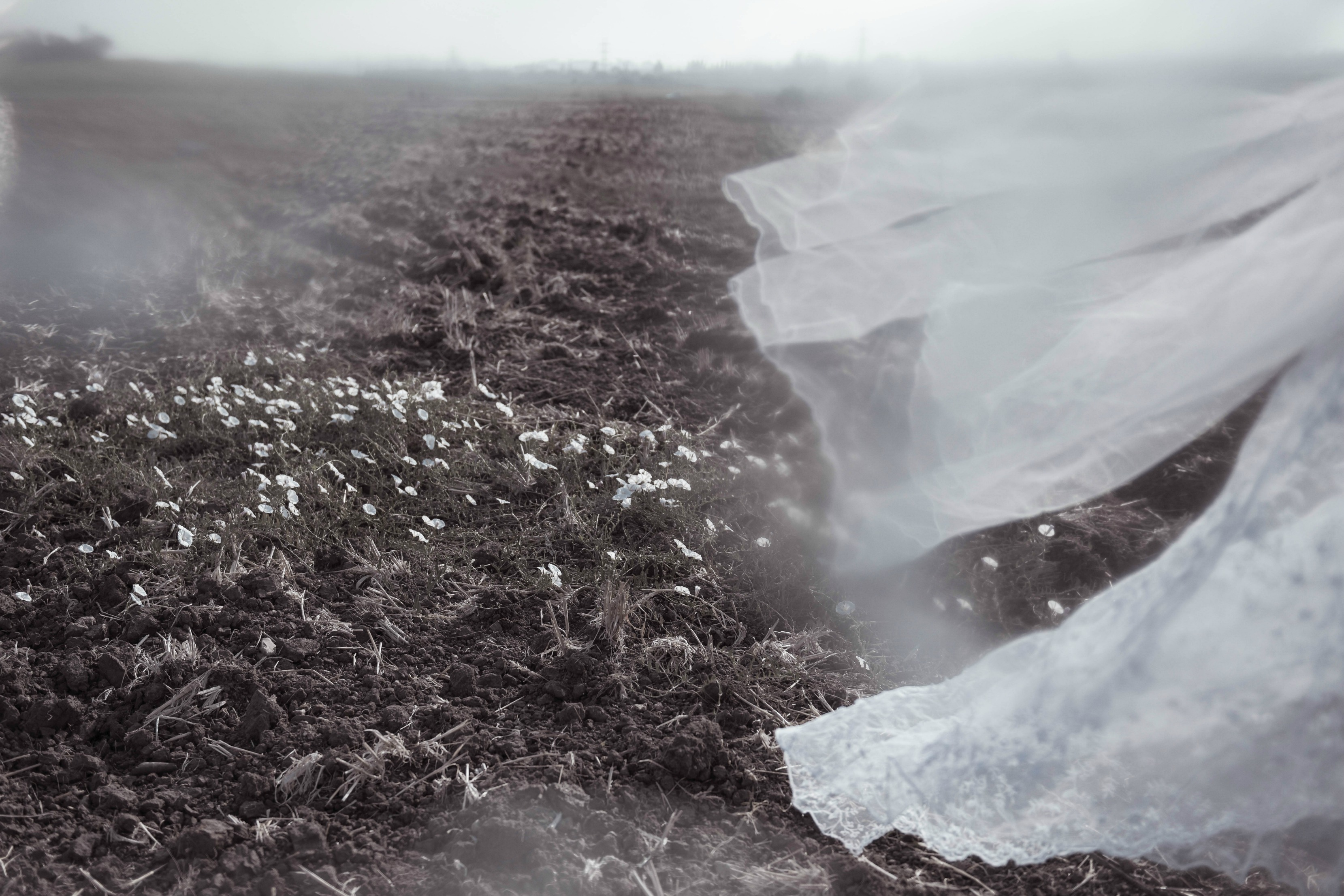 טול בשדה יבש מתוך הפוסט חיבוק של אדמה מהבלוג של תמרי סלונים ליבס tamariandme.com צילום : טלי רצקר
