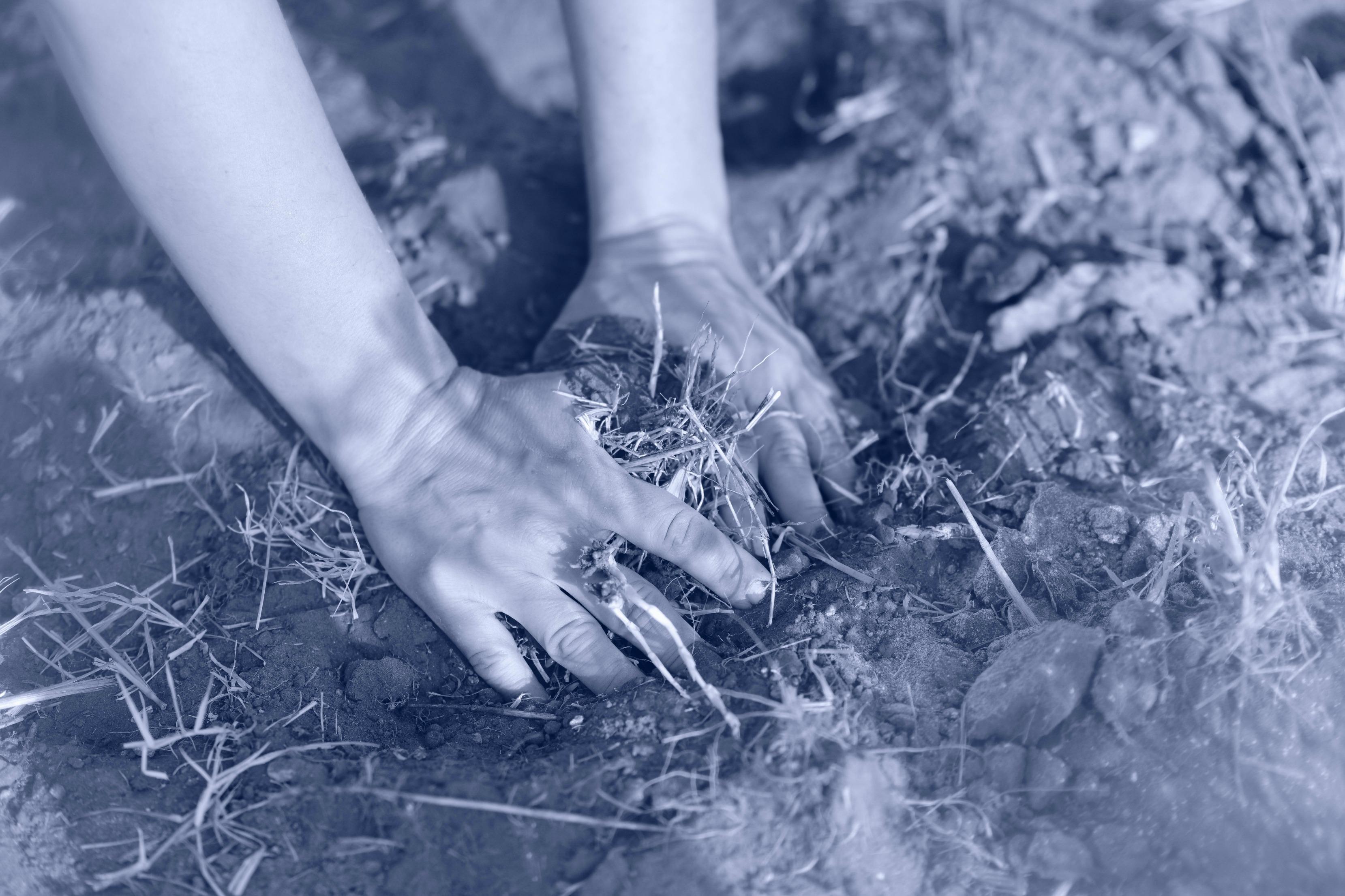 ידיים חופנות אדמה. מתוך הפוסט - חיבוק של אדמה מהבלוג של תמרי סלונים ליבס tamariandme.com צילום : טלי רצקר