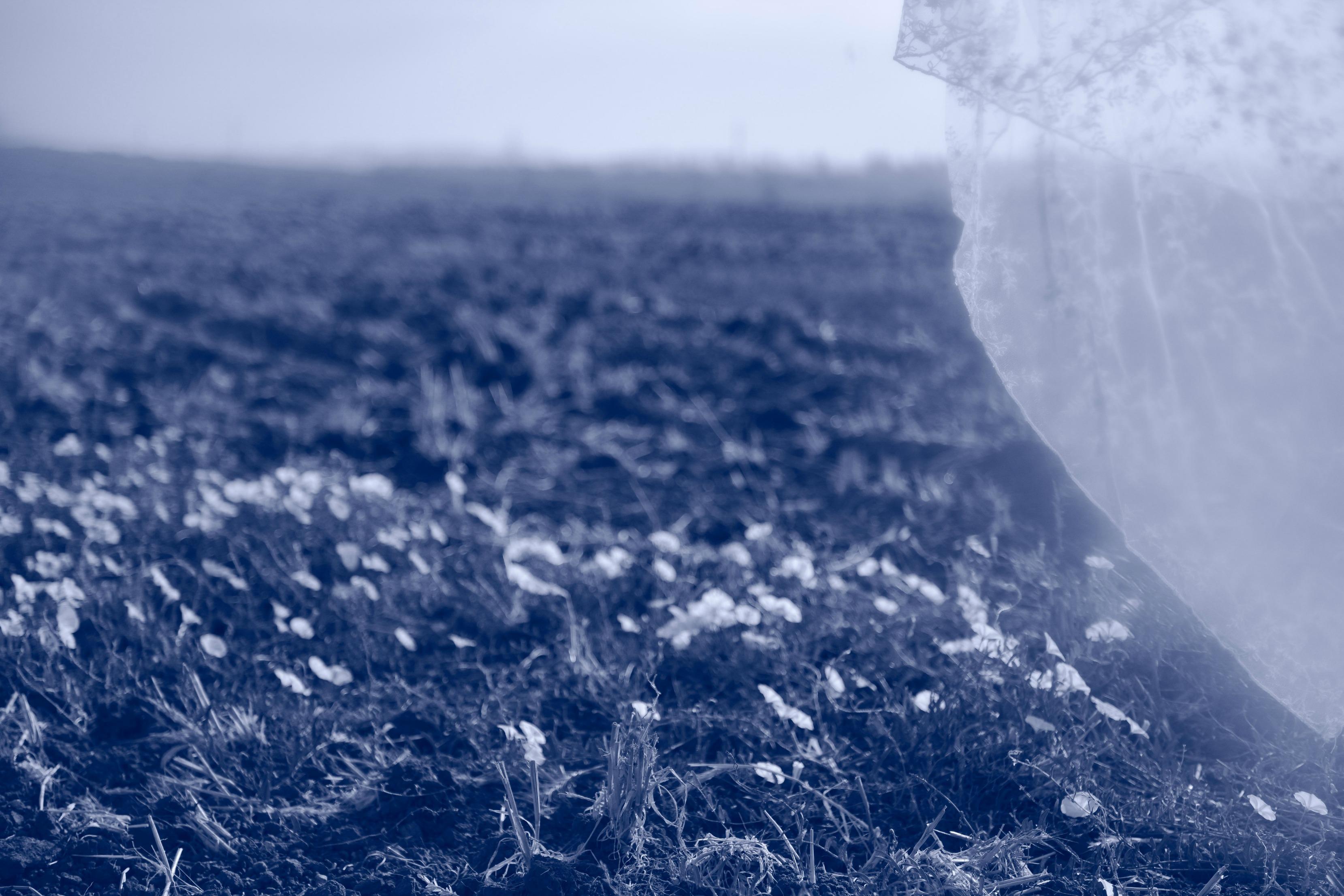 טול בשדה פרחים, פילטר כחול. מתוך הפוסט - חיבוק של אדמה מהבלוג של תמרי סלונים ליבס tamariandme.com צילום: טלי רצקר